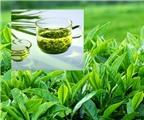 5 loại trà giảm cân nhanh và an toàn nhất