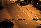 Ảnh động vật ấn tượng: Động vật ý thức băng qua đường