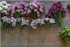 3 cách cắm hoa trang trí bàn đơn giản mà đẹp
