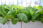 2 tháng có vườn rau xanh mướt cho người mới làm vườn