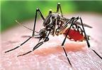 Làm gì để cả nhà tránh xa căn bệnh sốt xuất huyết?