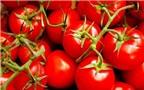 Những thực phẩm thường ngày chứa độc tố mà bạn không hề hay biết
