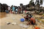 Hải sâm trước nguy cơ tuyệt chủng
