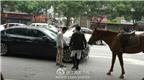BMW bấm còi bị ngựa đá hậu