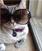 Nala-Chú mèo mập nổi tiếng nhất Instagram