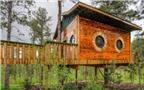 Ngôi nhà trên cây với thiết kế độc đáo