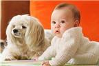 Có nên cho trẻ chơi với chó mèo không?