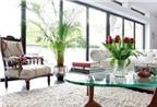 Bật mí những cách đưa cây xanh vào trang trí nhà ở