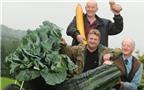 """Lão nông Anh bật mí về cách trồng rau, củ """"khủng"""""""