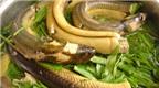 """Hiểm họa ăn lươn """"ngậm"""" thuốc tránh thai"""