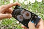 Chụp ảnh nghệ thuật bằng smartphone