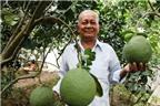 Gặp lão nông xuất ngoại dạy cách trồng bưởi không hạt