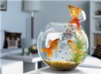 Cách đặt bể cá trong phòng làm việc hợp phong thủy