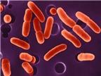 Nệm bẩn ảnh hưởng đến sức khỏe như thế nào?