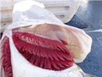 Cách chọn cá không bị nhiễm độc