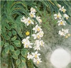 Cách treo tranh hoa lan