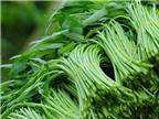 Cách ăn rau muống đúng để giảm độc tố