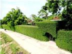 Ngắm những chiếc cổng nhà thơ mộng từ cây xanh