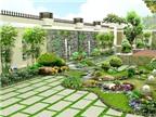 Cách trồng cây cảnh trong nhà mang tài lộc dồi dào cho gia chủ