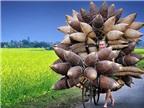 Ảnh du lịch Việt Nam lọt Top 37 ảnh xuất sắc nhất 2015