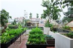 Vườn đẹp xanh mướt rau của chủ nhà ở phố