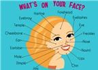 Từ vựng tiếng Anh về khuôn mặt