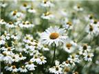 Chọn nước hoa mùa hè theo tính cách