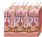 Chẩn bệnh cho da nhờn, da khô
