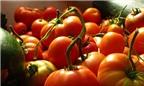 Làm đẹp... toàn tập từ cà chua