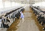 Sữa tươi tuyệt hảo nhập nhèm nguồn gốc