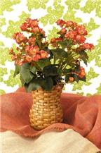 Tự chế giỏ cắm hoa phong cách từ giấy báo cũ