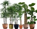 Cách chăm sóc cây cảnh trong nhà
