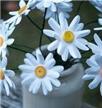 Cách cực dễ làm hoa cúc giấy trắng tinh khôi