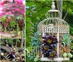 Bật mí cách biến lồng chim cũ thành giỏ hoa trang trí